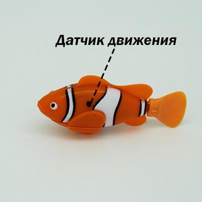 Как работает рыбка-клоун, рыбки-роботы